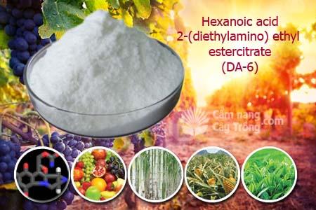 Hexanoic acid, 2-(diethylamino) ethyl estercitrate