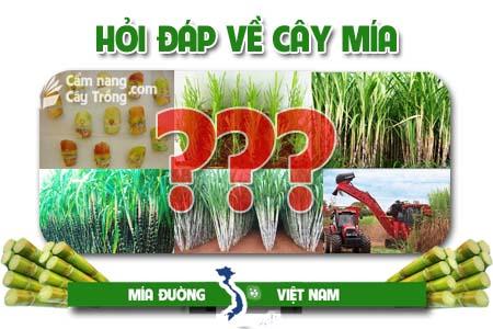 Hỏi đáp về cây mía và sản xuất mía đường (kỳ 13)