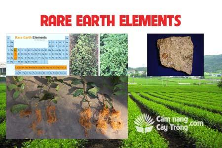 Vi lượng đất hiếm - Rare Earth Elements
