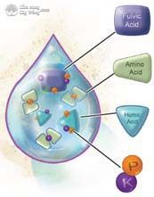 Cấu trúc phân bón Amino Chelate