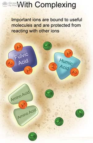 Với phức chất Các ion quan trọng liên kết với các phân tử hữu ích và bảo vệ khỏi tương tác với các ion khác