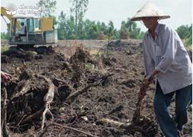 Dọn vệ sinh đất trồng