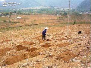Đất lúa không chủ động được nước