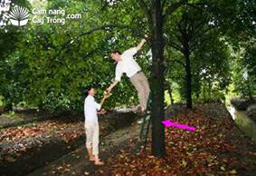 Cây cao trung bình 7-12 m