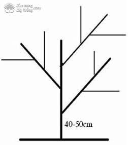 Mô hình tán cây sầu riêng