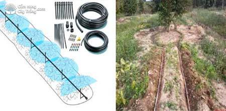 Bố trí hệ thống tưới nhỏ giọt và các đường ống dẫn nước  và đường ống tưới nhỏ giọt