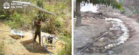 Lắp đặt hệ thống tưới nước tự động bằng năng lượng mặt trời và nước chảy ra từ hệ thống tưới nhỏ giọt