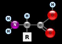 Axit Amin (Amino Acid)