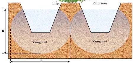 Vùng đất ướt khi tưới rãnh