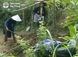 Tưới nước cho đống ủ