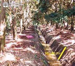 Quản lý mực nước trong vườn ở độ sâu 60-80 cm sau khi ra hoa