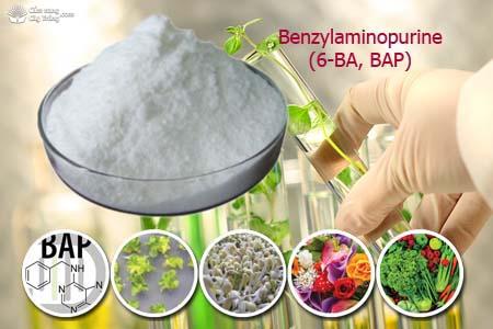 Giới thiệu hoạt chất: Benzylaminopurine (6-BA, BAP)