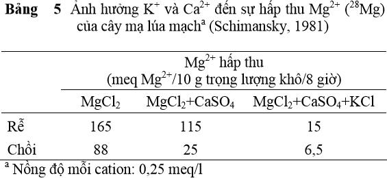 Ảnh hưởng K+ và Ca2+ đến sự hấp thu Mg2+ (28Mg) của cây mạ lúa mạch