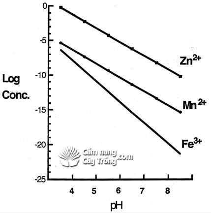 Ảnh hưởng của pH đất đến hiệu quả của vi lượng