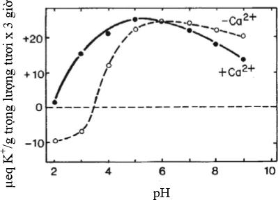 Ảnh hưởng của pH đến sự hấp thu Kali
