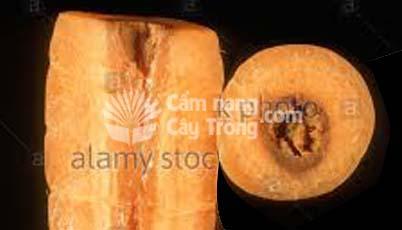 Củ cà rốt bị thiếu bo