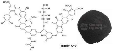 Cấu tạo Axit humic và bột Axit Humic