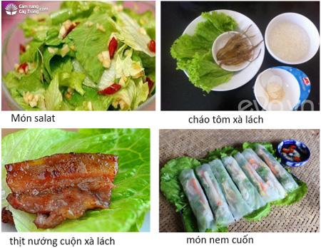 Giới thiệu các món ăn từ rau xà lách