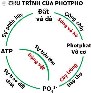 Chu trình photpho trong tự nhiên