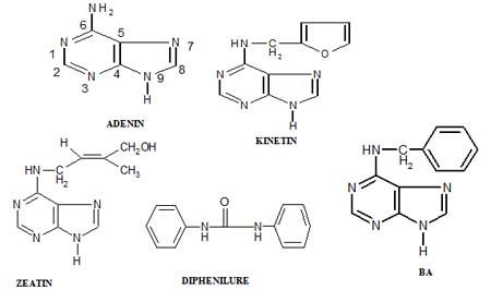 Cytokinin công thức cấu tạo