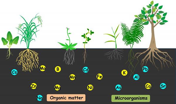 Dinh dưỡng cây trồng - dinh dưỡng khoáng