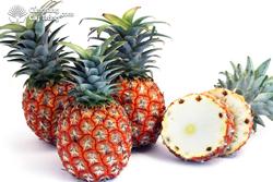 Dứa ta (Ananas comosus var spanish hay Ananas comosus sousvar - red spanish)