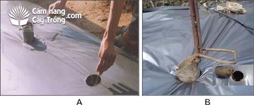(A) Đục lỗ màng phủ bằng lon nhiệt; (B) Đục lỗ màng phủ bằng lon