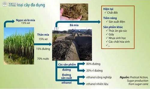 Giá trị kinh tế của cây mía