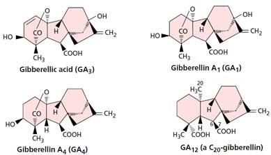 Cấu tạo của một số Gibberellin điển hình