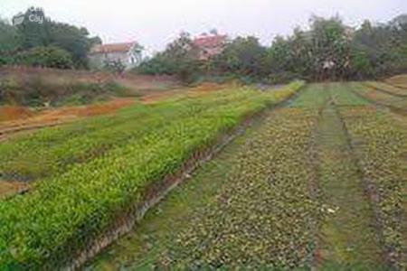 Gieo hạt trong bầu xếp thành luống trên vườn ươm