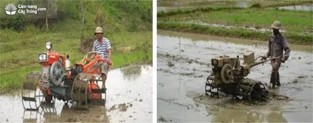 Làm đất để gieo mạ bằng máy làm đất mini