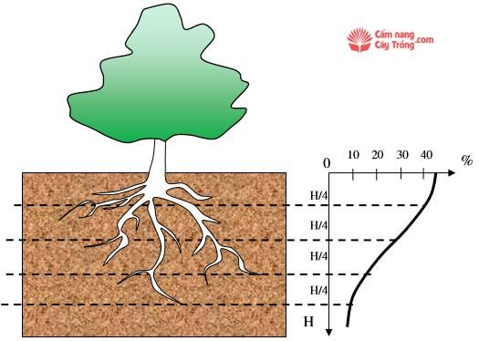Khả năng hút nước của cây trồng theo độ sâu