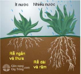 Lượng nước tưới cho cây trồng