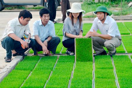 Mạ khay được sản xuất tại công ty cổ phần công nông nghiệp Việt Mỹ