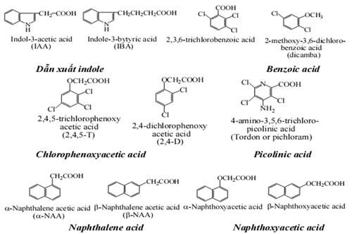 Một số chất điển hình của Auxin
