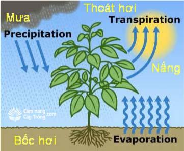 Một số yếu tố khí hậu tác động lên cây trồng