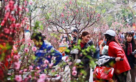 Người dân Việt Nam đi mua đào tết