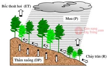 Mưa và sự hình thành dòng chảy từ mưa