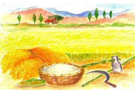 Nông nghiệp hữu cơ là gì 03