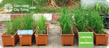 Tác dụng của chất hữu cơ đối với cây trồng