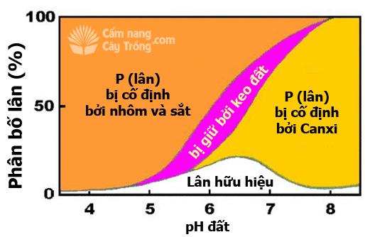 Ảnh hưởng của pH đối với phân bố phốt pho vô cơ (lân) trong đất