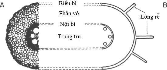 Phẫu diện của tế bào