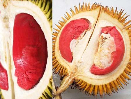 Cơm sầu riêng có màu đỏ và các màu đỏ cũng đậm lợt khác nhau