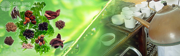 Tác dụng của cây dược liệu đối với sức khỏe con người