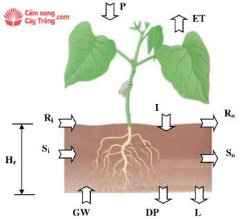 Các thông số trong phương trình cân bằng nước vùng rễ cây