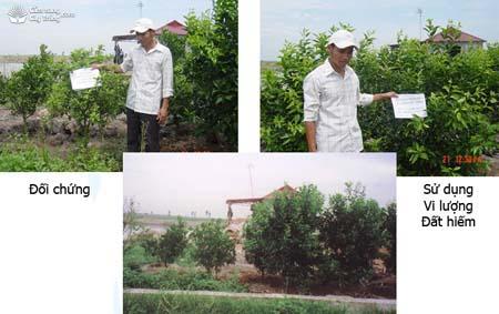 Hình ảnh đối chứng (trái) và sử dụng vi lượng đất hiếm (phải)