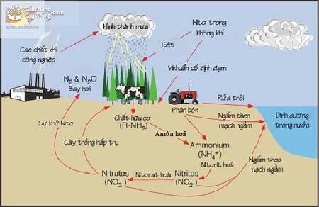 Chu trình chuyển hóa đạm trong tự nhiên