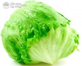 Xà lách Mỹ (Iceburg Lettuce hay Iceberg/crisphead)