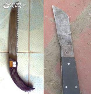 Cưa và dao dùng để khoanh vỏ cành