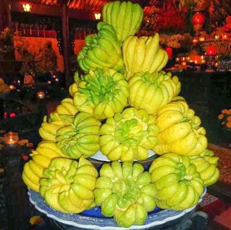 Quả Phật thủ - loại quả không thể thiếu trên bàn thờ tổ tiên các dịp lễ, Tết